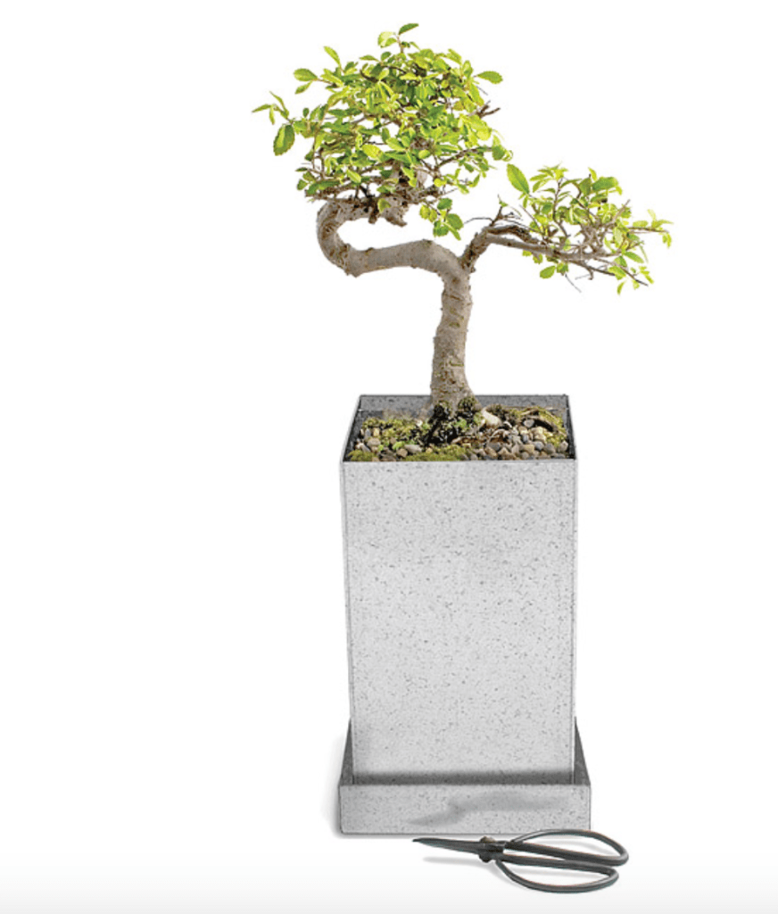 Bonsai gift guide dream design discover
