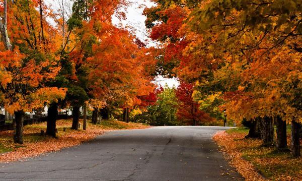 Wallpaper Images Of Fall Trees Lined Lake Maple Real Estate Lisa Sinopoli