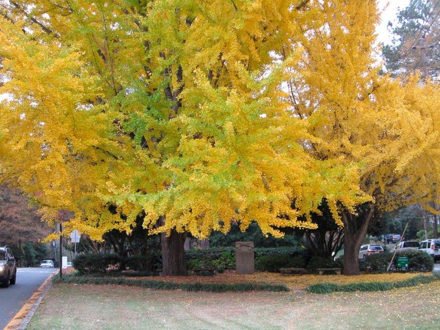 I am thankful for these B-E-A-U-tiful trees!