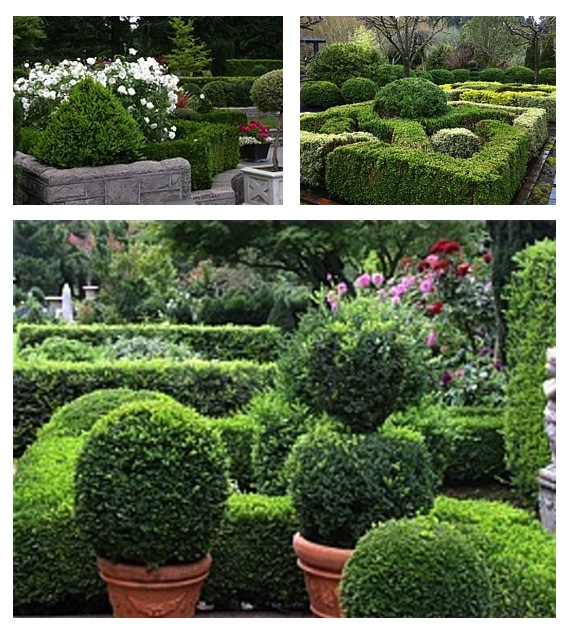 Knot gardens with globe topiary accents—try this in a courtyard or entry garden