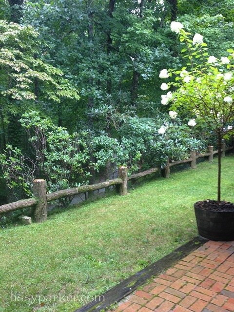 Laurels and Rhododendron now block the gravel road below—privacy for guest
