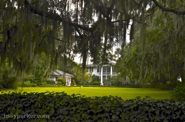 Good hedges make good neighbors