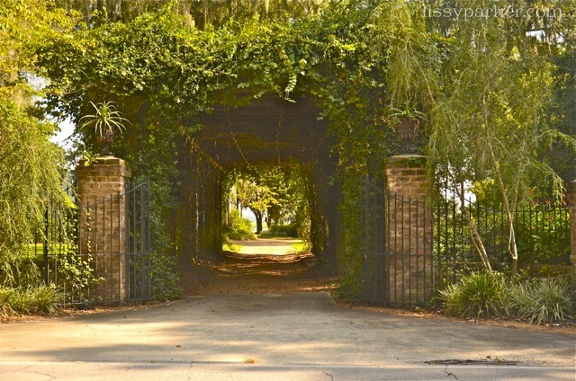 Imagine entering this vine covered pergola every time you come home ... so enchanting