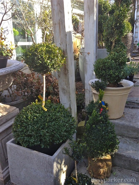 Topiary in all shapes and sizes