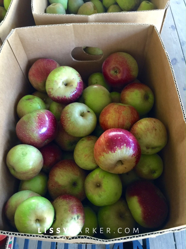 Wolf River apples
