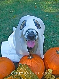 Happy Halloween!   lissyparker.com
