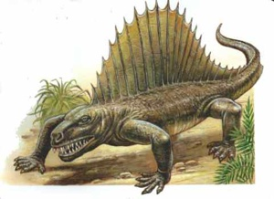 Dimetrodon