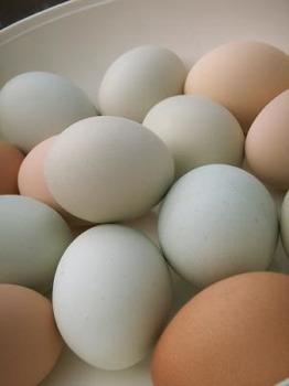 Eggs 0