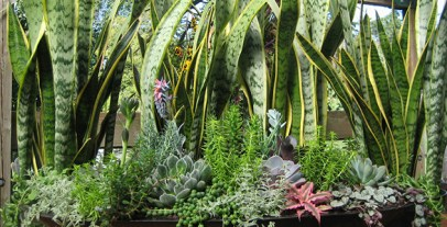 indoor_plant_sale