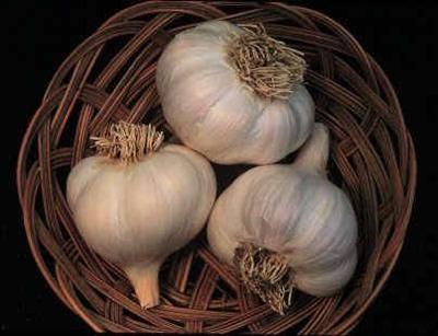 Garlic02.Jpg