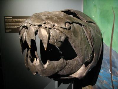 Img 0907 Dunkleosteus - Palaeozoic Era - Devonian Period