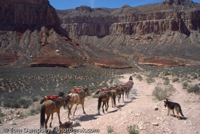 99Az-11-25 Havasu-Canyon-Mule-Train