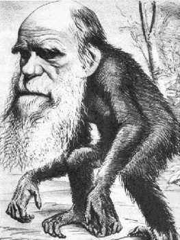Darwin As Monkey
