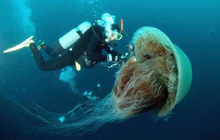060119 Jellyfish