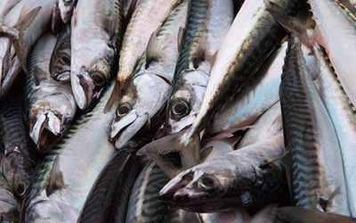 Fish460 1012615C