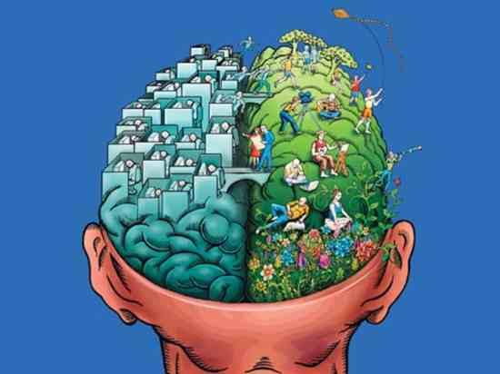 Ff 70 Brain1 F 1