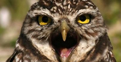 burrowing-owl-eye-to-eye-max-allen