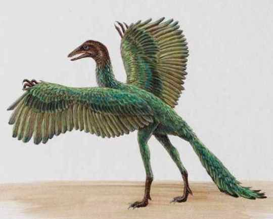 Archaeopteryx