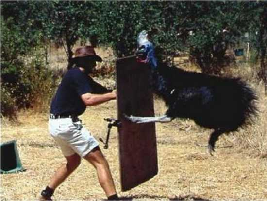 Cassowary Attack