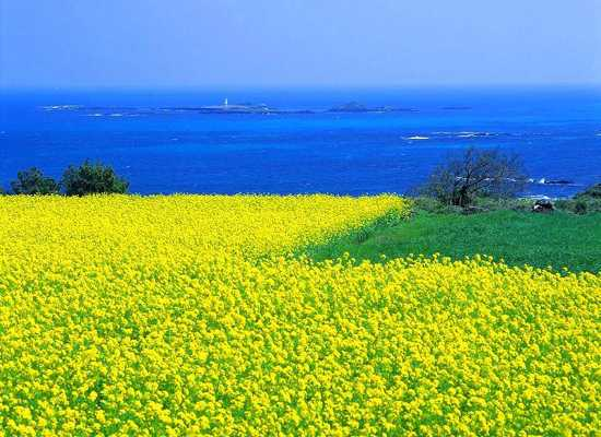 Jeju-Island