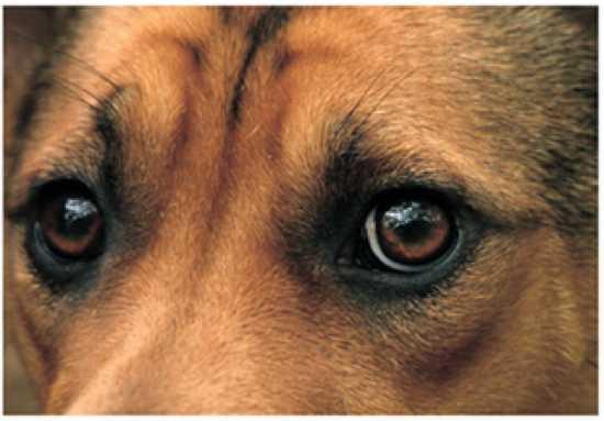 Scared Dog1