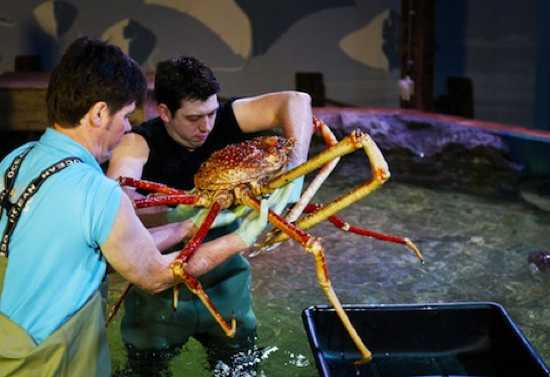 Crabzilla-Biggest-Known-Crab