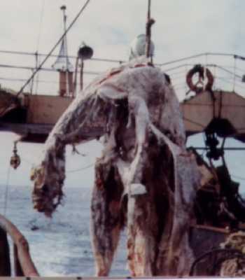 Zuiyo Maru