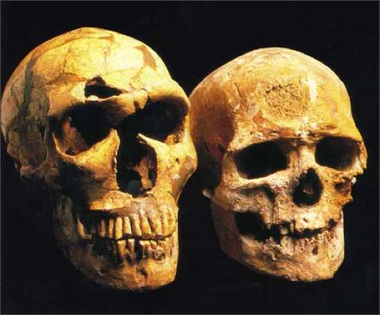 Neanderthalis Cro-Magnon