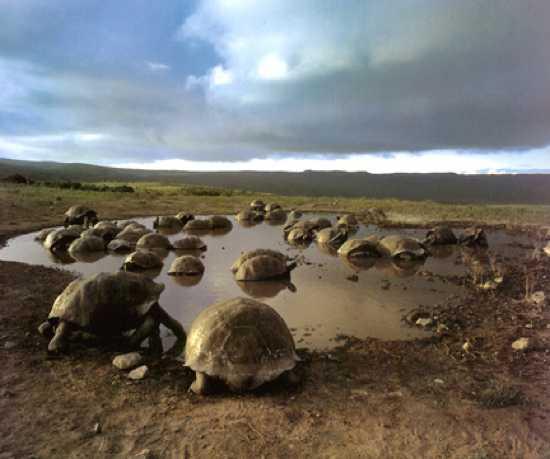 Tortoisesalcedo