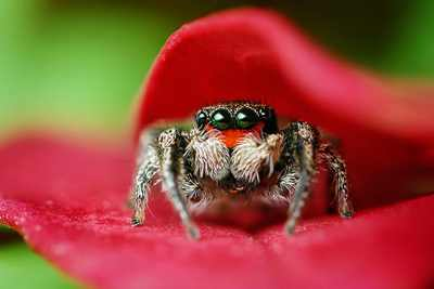 Jumping-Spider-Goes-To-A-Photo-Session-Spider6