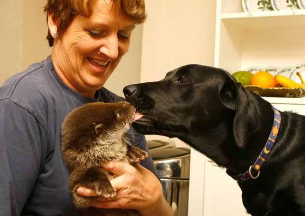 Otter-Dog 1718673I
