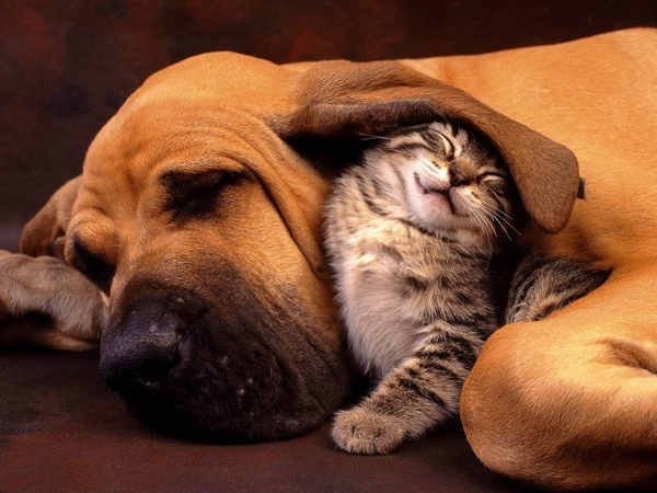 Cat-And-Dog