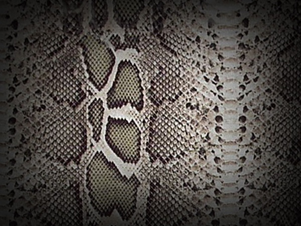 Textures   Snake Skin By Loo Lee
