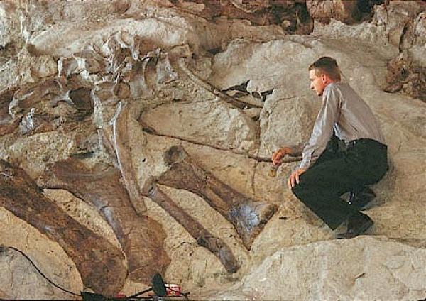 Dinosaur3251A