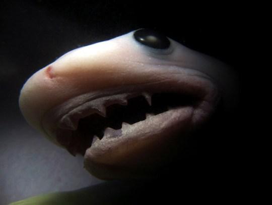 Baby-Shark-Inside-Womb-11