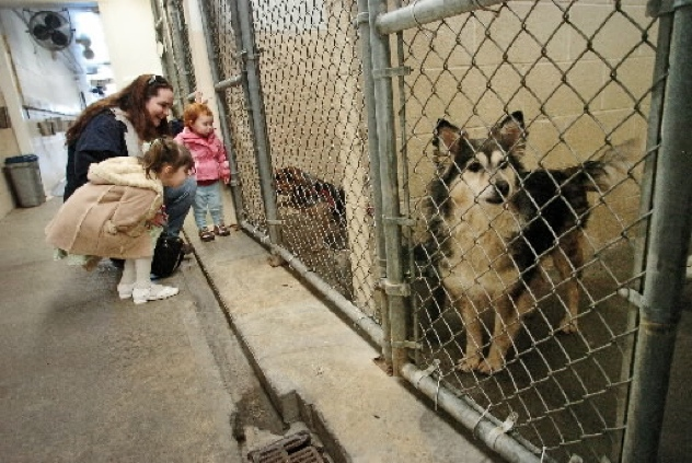 Do Dogs Get Put Down In Shelters