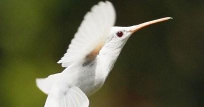 hummingbird-e1375841494469