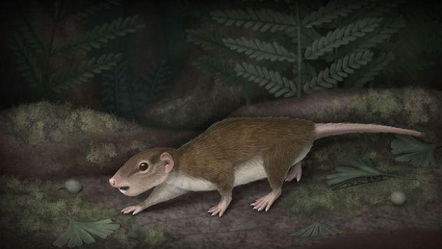 Jurassic-rat-Rugosodon-eurasiaticus-2172390