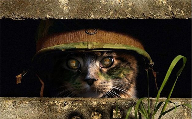 cat-army - I am watching the watcher - Introduce Yourself