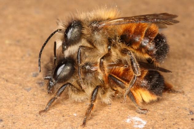 Bee nooky