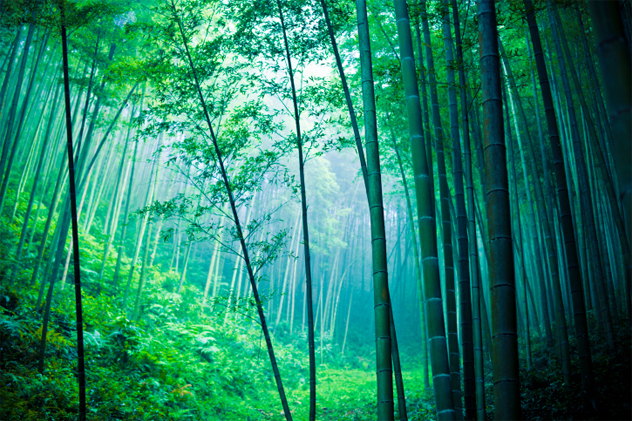 3-bamboo