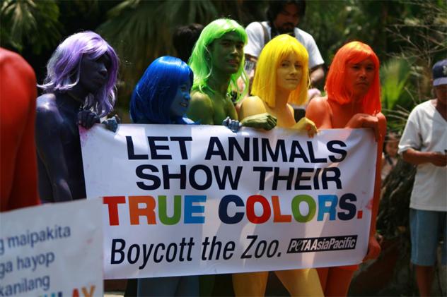 5- anti zoo