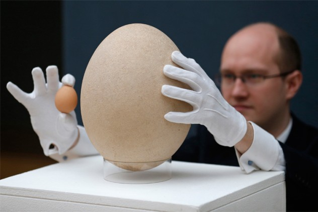 Christie's specialist James Hyslop holds a chicken egg next to a pre-17th century, sub-fossilised Elephant Bird egg in London