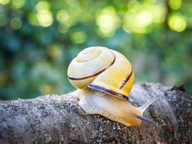 10- snail