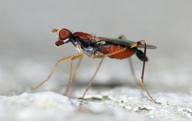 8- flies
