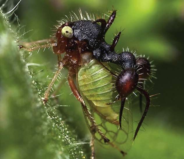 9- treehopper