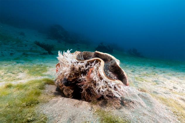 4- clam