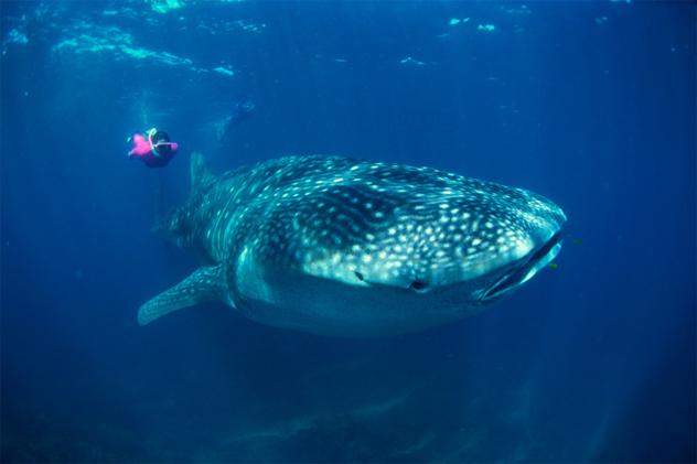 4- whale