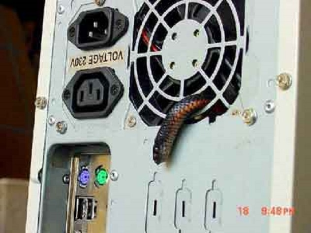 snake-in-computer1