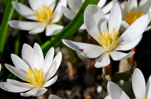 10 ازهار جميلة يمكن أن تتسبب في وفاتك 7 30/5/2014 - 1:32 م